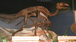 Dinosaur_exhibit