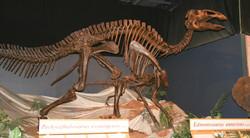 Dinosaur_exhibit
