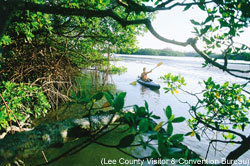 Paddling_through_mangroves