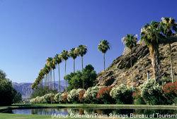 Palmspringspalmtrees